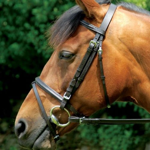 Classic Bridle & Reins